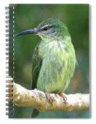 Purple Honeycreeper Female Spiral Notebook