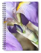 Purple Iris With Focus On Bud Spiral Notebook