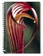 Purple Jack In Pulpit Spiral Notebook
