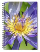Purple Water Lily Flowers Blooming In Pond Spiral Notebook