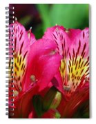 Purple Peruvian Lily Spiral Notebook