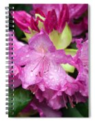 Purple Pink Spiral Notebook