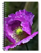 Purple Poppy Spiral Notebook