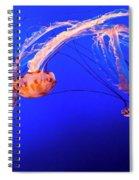Purple Striped Jelly Spiral Notebook