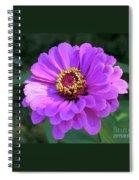 Purple Zinnia  Spiral Notebook