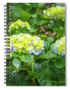 Purplea And Yellow Hydrangea Flowers Spiral Notebook