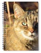 Purr-fect Kitty Cat Friend Spiral Notebook