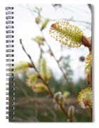 Pussy Willow Blossoms Spiral Notebook