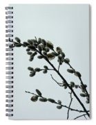 Pussy Willow Catkins Spiral Notebook