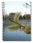 Pussy Willow Flowers Spiral Notebook