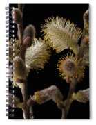 Pussy Willow Spiral Notebook
