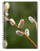 Pussy Willows In Spring Spiral Notebook