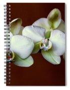 Quadruples Spiral Notebook