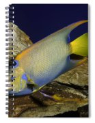 Queen Angelfish Spiral Notebook