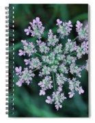 Queen Anne Spiral Notebook
