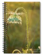 Queen Anne's Lace In Evening Spiral Notebook
