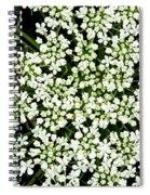 Queen Anne's Lace Patterns Spiral Notebook