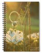Queen Anne's Lace Sunset Spiral Notebook