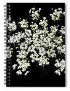 Queen Anne's Lace Wildflower - Daucus Carota Spiral Notebook