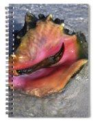Queen Conch Peeking  Spiral Notebook