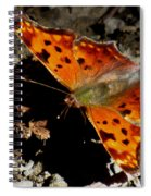 Question Mark Butterfly Spiral Notebook