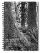 Quinault Rain Forest 3152 Spiral Notebook