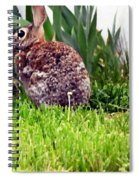 Rabbit As A Painting Spiral Notebook