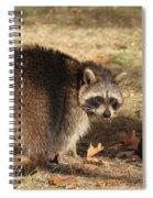 Raccoon #4 Spiral Notebook