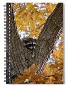 Raccoon Nape Spiral Notebook
