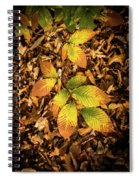 Radiant Beech Leaf Branches Spiral Notebook