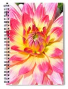 Radiant Spiral Notebook