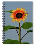 Radiant Sunflower Spiral Notebook