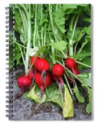 Radish Harvest Spiral Notebook