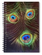 Raffiki Peacock Spiral Notebook