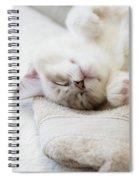 Ragdoll Kitten Asleep Spiral Notebook
