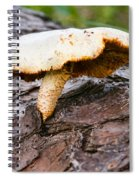 Raggedy Toadstool Spiral Notebook
