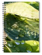 Rain Collecting On Hosta Leaves Spiral Notebook
