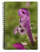 Rain Drop Olympics On Dead Nettle Flower Spiral Notebook