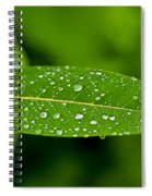 Rain Drops On Leaves #1 Spiral Notebook