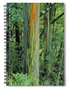 Rainbow Eucalyptus Spiral Notebook