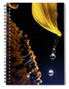Raindrops From Sunflower Petal Spiral Notebook