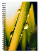 Raindrops On A Blade Of Grass Spiral Notebook