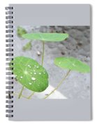 Raindrops On A Nasturtium Leaf Spiral Notebook