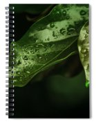 Raindrops On Avocado Leafs Spiral Notebook