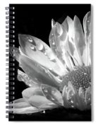 Raindrops On Daisy Black And White Spiral Notebook