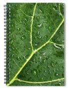 Raindrops On Fiddle Leaf Spiral Notebook