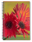Raindrops On Gerbera Spiral Notebook