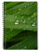 Raindrops On Green Leaves Spiral Notebook