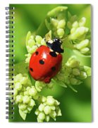Raindrops On Ladybug Spiral Notebook