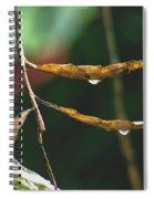 Raindrops On Leaf 3 Spiral Notebook